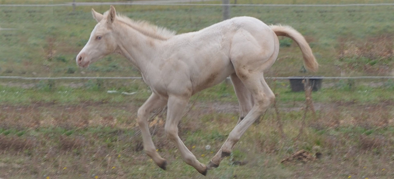 Learn About Genetic Issues Affecting Horses